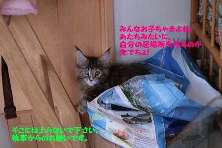 Img_5977_1