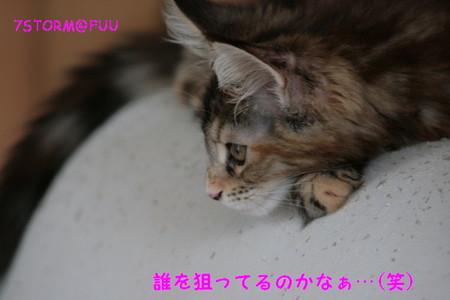 Img_6067_1