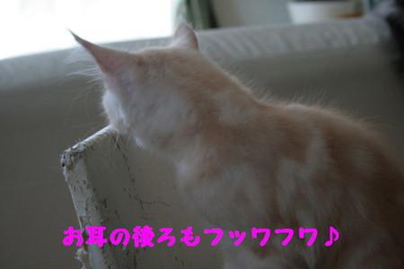 Img_6133_1