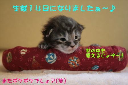 Img_7987_1