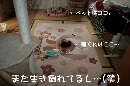 Img_8078_1