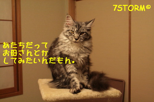 Img_8951_1_2