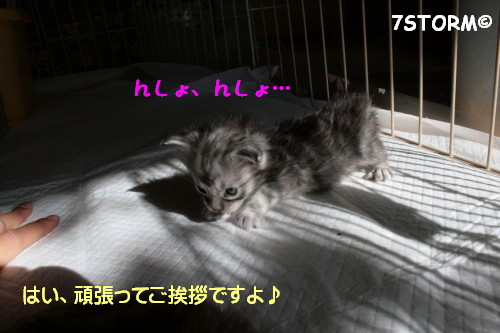 Img_9131_1